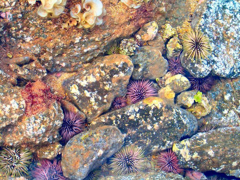 Pict3298sb, Tidal pool, Salt Pond Beach, Hanapepe,  8am,  aug 19, 2005.jpg