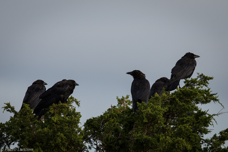 The Crow Family