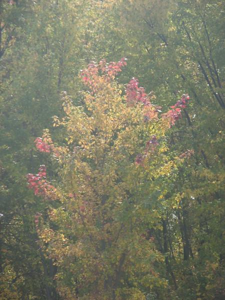 Fall pics 2008 025.jpg