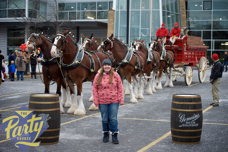 Clydesdale Portraits 72.jpg