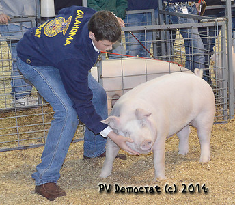 Garvin County Livestock Pigs 2014