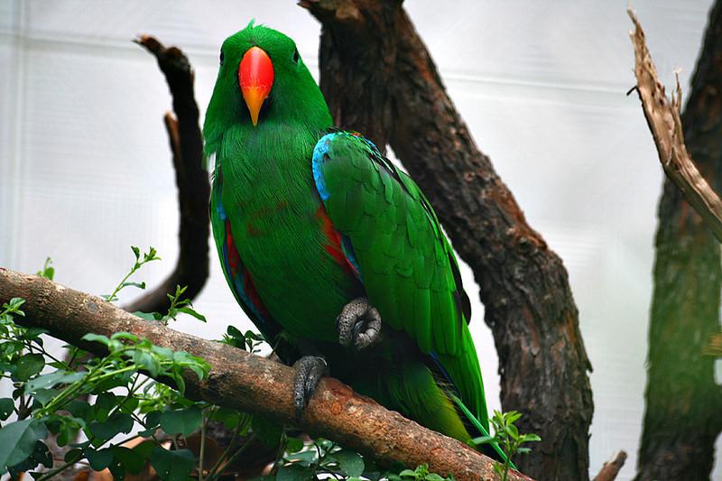 Kadoorie Farm, Parrot