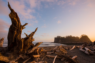 Olympic National Park 2016