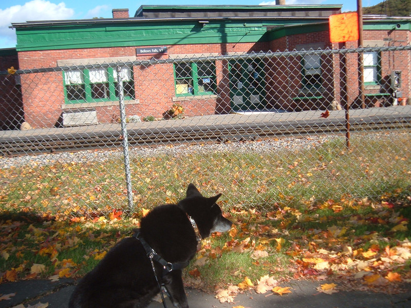 Reagan Keeps A Close Eye On The Platform For Any Suspicious Activity During Her Visit To Bellows Falls, Vermont And The Arrival Of Train 55.   October 2012
