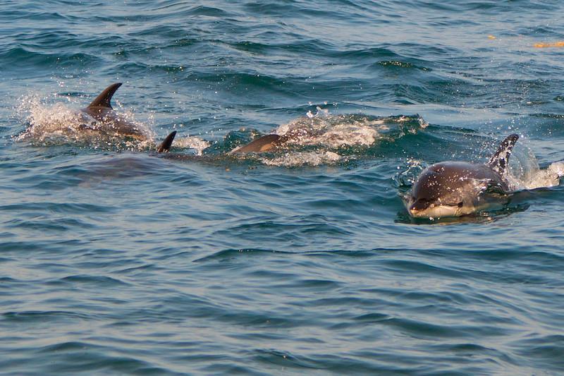 dolphin pod2.jpg
