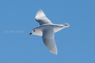 Antarctic birdlife