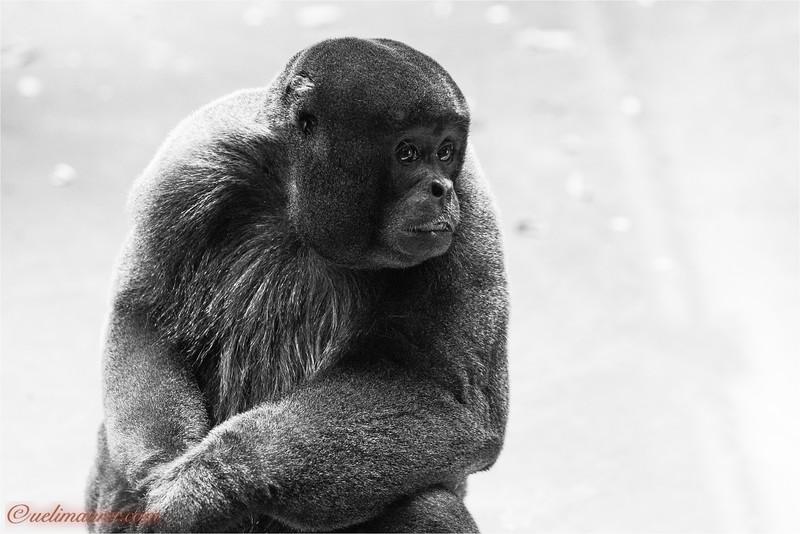 2017-11-16 Zoo Basel - IMG_3411.jpg