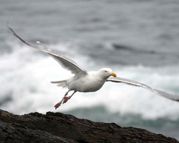 2004-09-16_195441_seagull3.jpg
