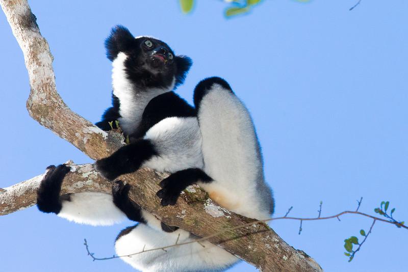 Madagascar_2013_FH0T9433.jpg