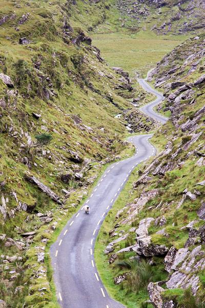Sheep in the Ballaghbeama Gap
