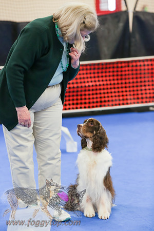 March 2016 Oakes K9 Training WC Rally Trial