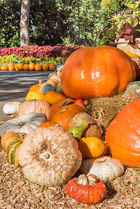 Large pumkin on a hay bale with several smaller gourds and pumkins