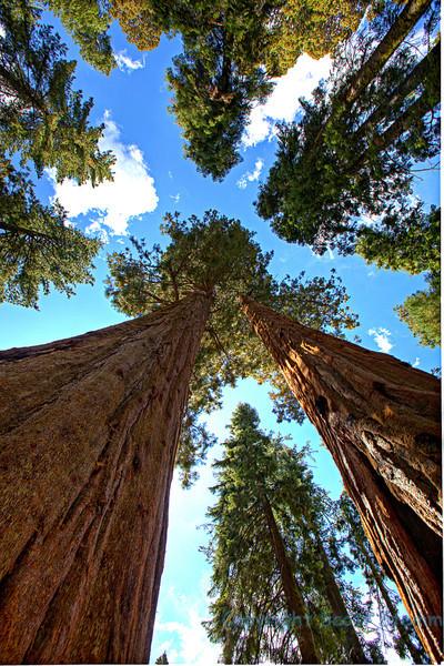 Sequoia-6-1.jpg