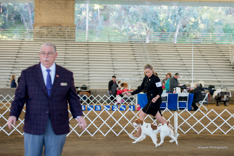2020 Long Beach Kennel Club