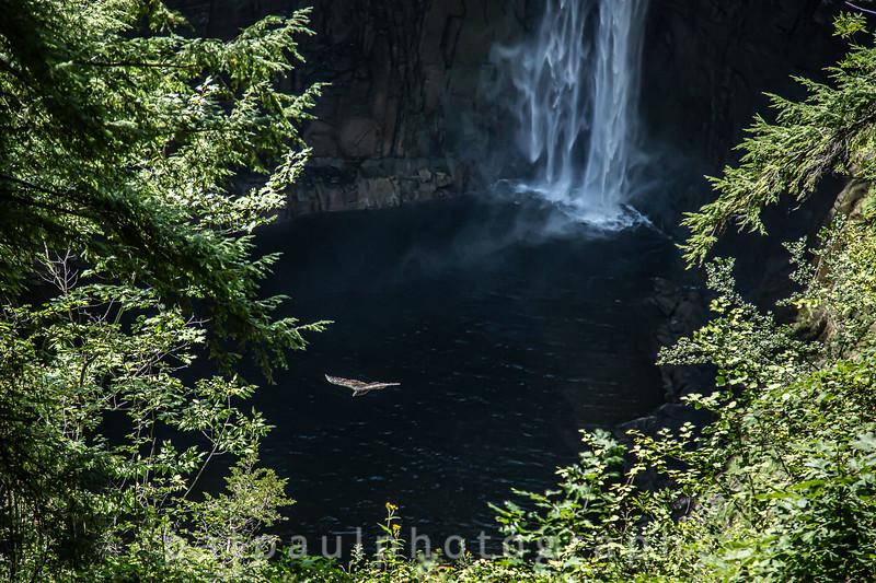 Raptor Flying Over Taughannock Falls