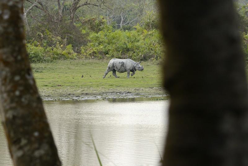 Rhino-framed.jpg