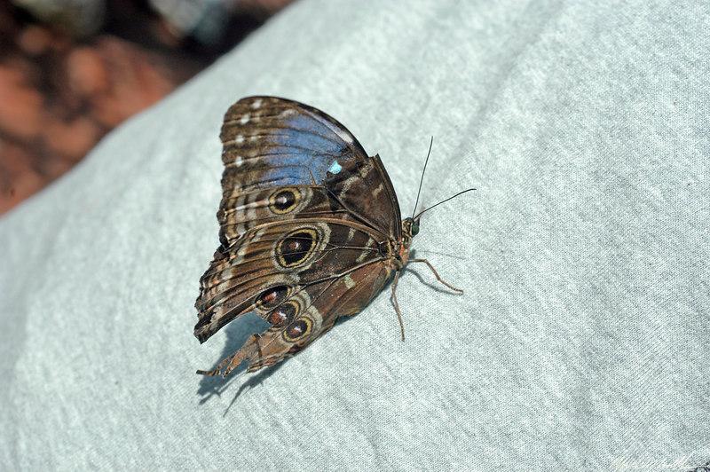 2006 Key West Butterflies DSC_0209.jpg