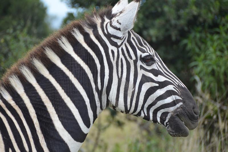 East Africa Safari 6.jpg