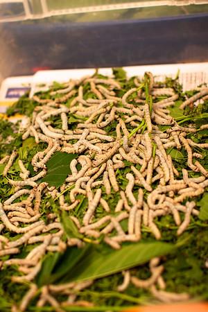 Bug Expo: Natural History Musuem