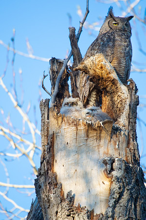 2019 Owl Babies