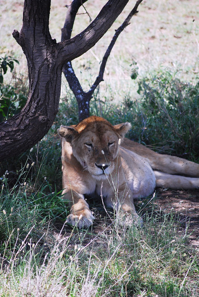 Serengeti (175).JPG
