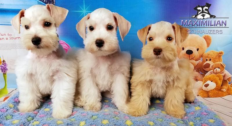 Jasmine Pups 007.jpg