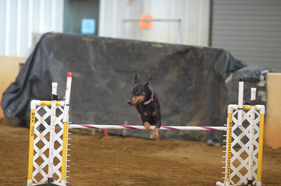Bayshore Companion Dog Club AKC Agility Trial February 19-21