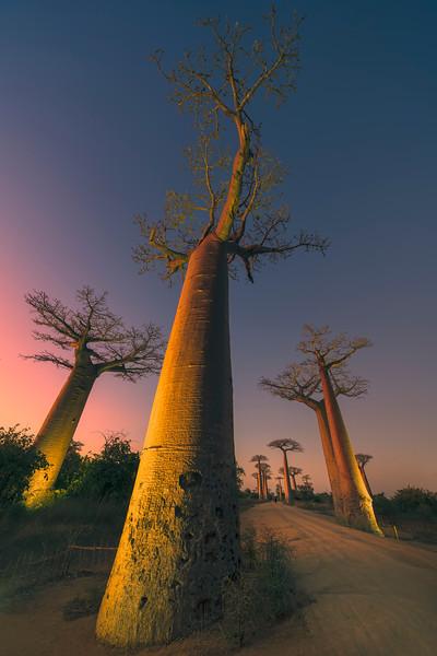 Avenue of Baobabs Vertical v2.jpg