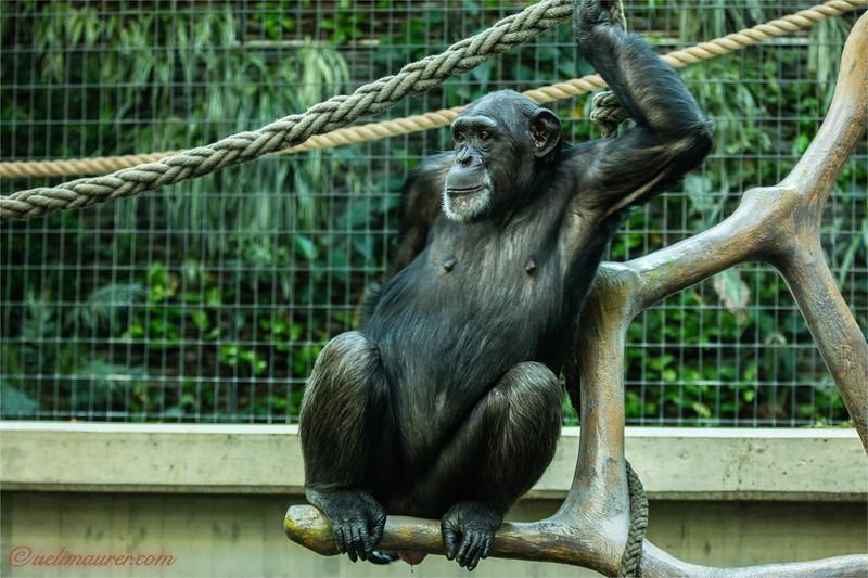 2016-10-05 Zoo Basel0U5A0447.jpg