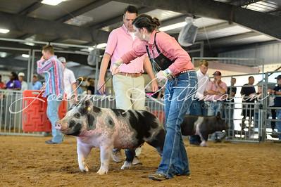 Hog Ringshots - Class 8, 9, 10, Grand, & Showmanship