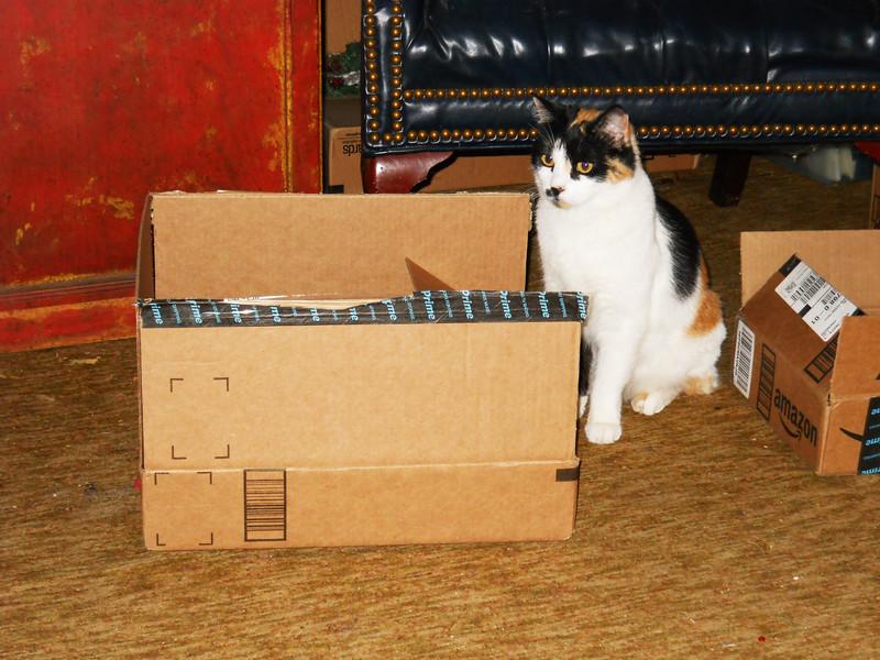 MOLLY'S NEW BOX