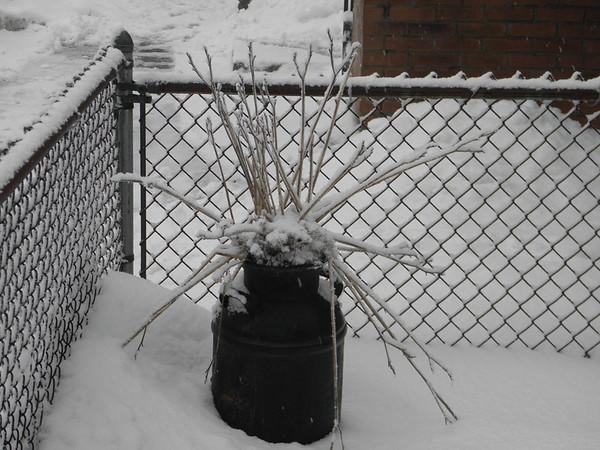 snow pics 1-19-11