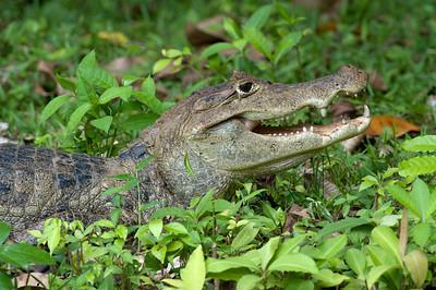 Costa Rica November 2009