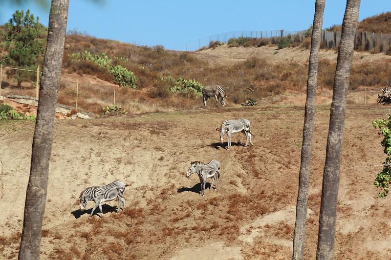 San Diego wild animal pakr 201700086.jpg