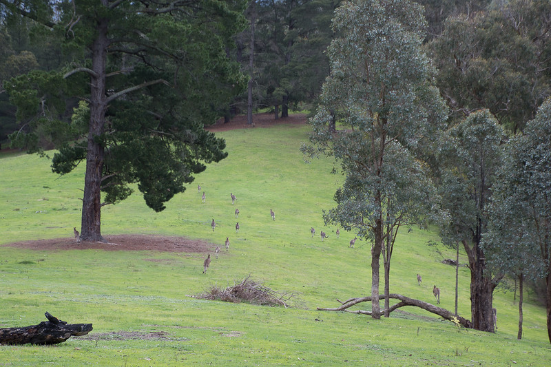 The view from the first house we lived in Smiths Gully near Melbourne