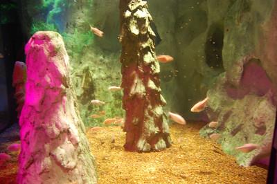 Musems-Aquariums