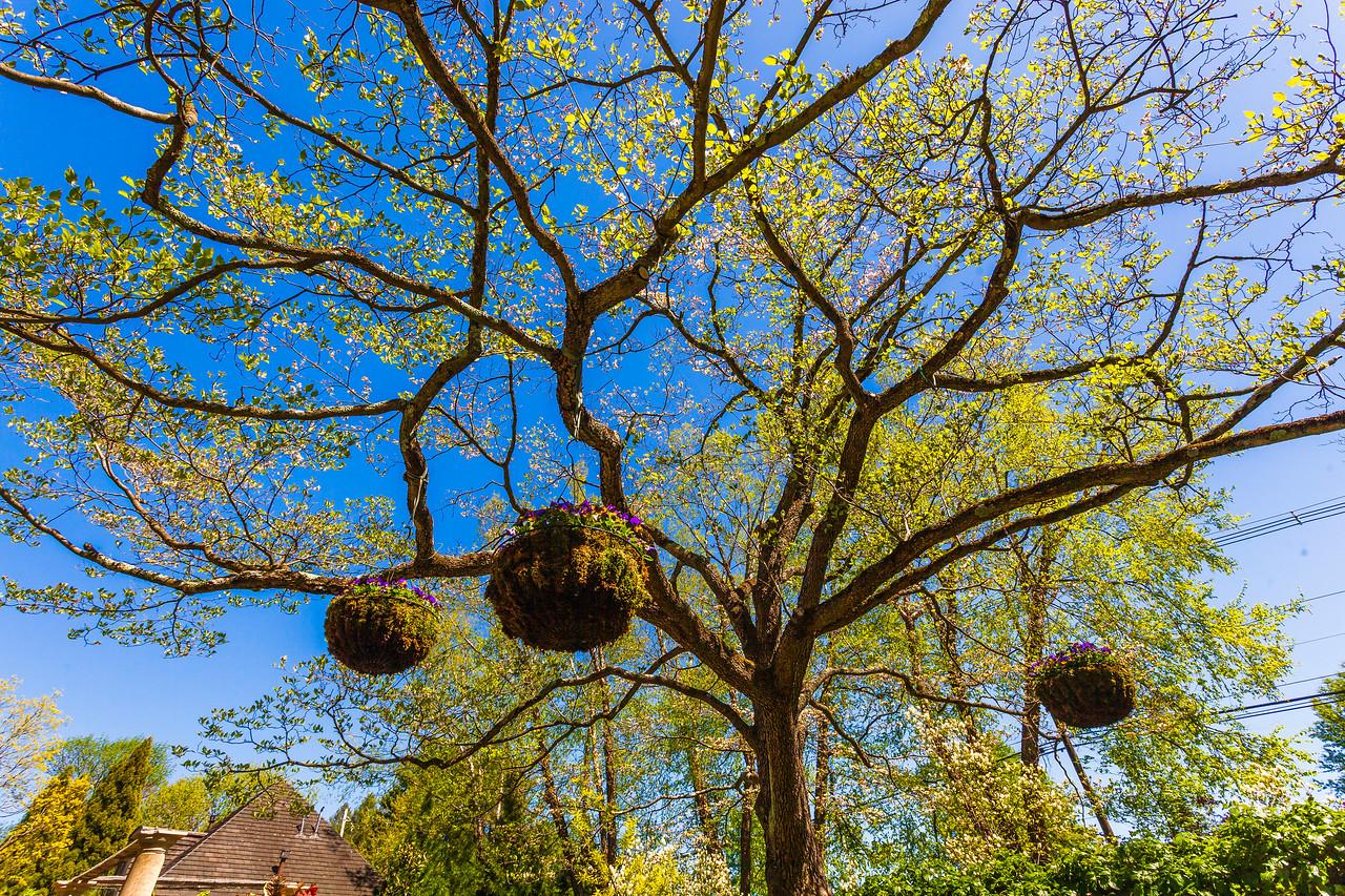 Chanticleer花园,树上盆景