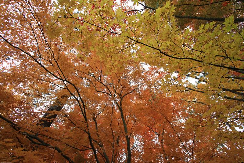 fall-2-4.jpg