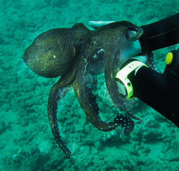 Hawaii diving - 136.jpg