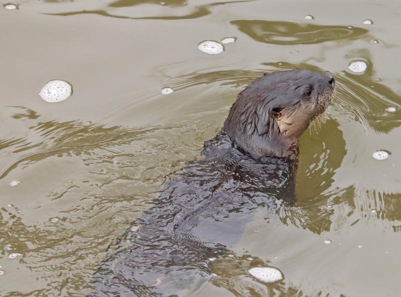 Otter 807