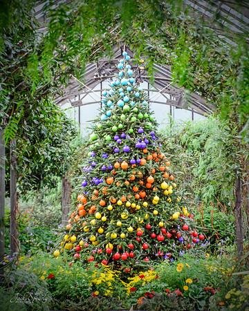 A Longwood Gardens Christmas 2016