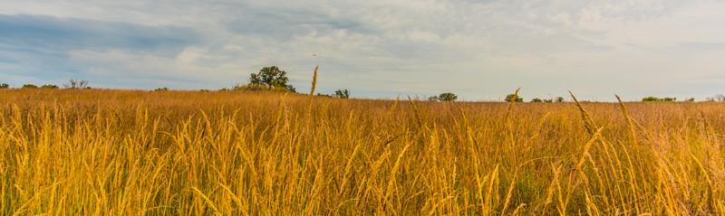 Prairie  29