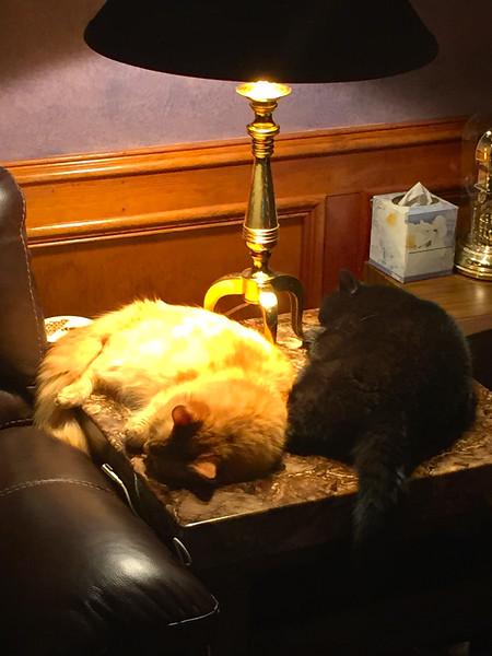 Fuzzy & Spooky Sleeping On Den Table 12-20-14