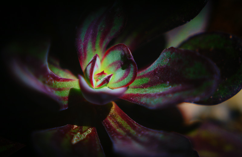 succulents 0704-2-3.jpg