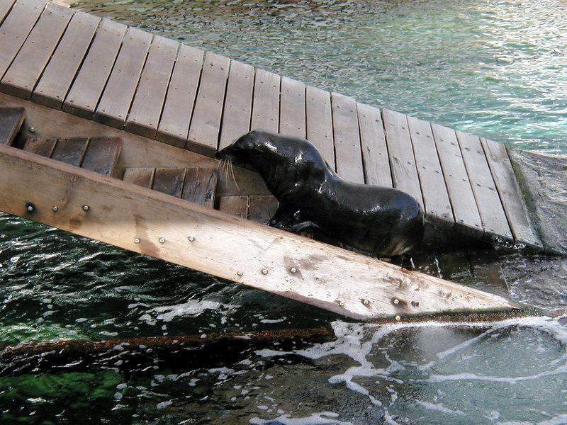 35.  Sydney Aquarium.JPG