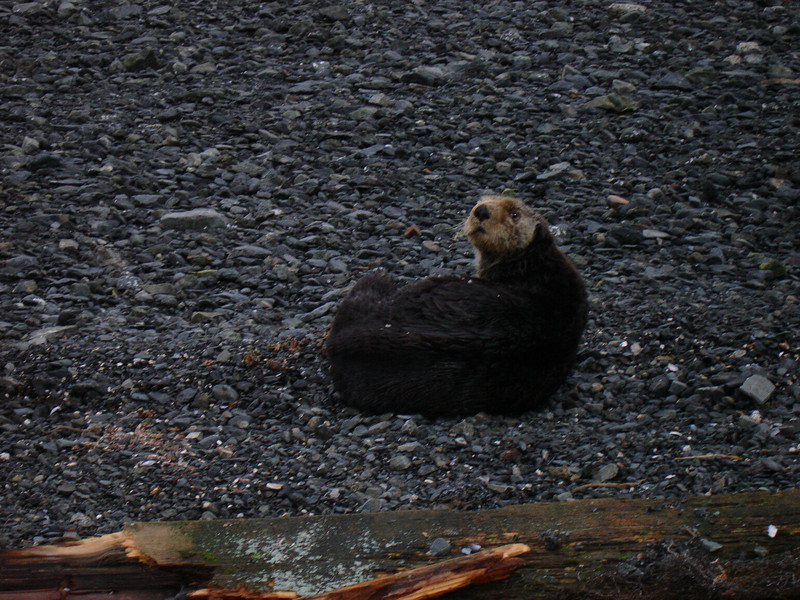Alaska 2008 057.jpg