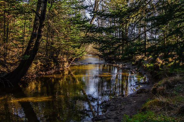 Sælandsskogen