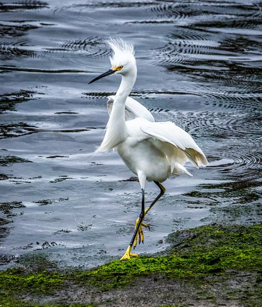 Annenberg Photography Birding Workshop