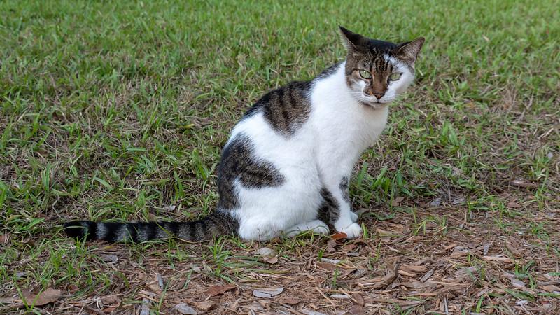 Florida-Keys-Key-West-Hemingway-Home-Cats-19.jpg