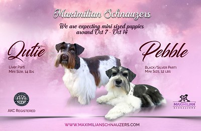 Qutie & Pebble Puppy, DOB 10/26/2020
